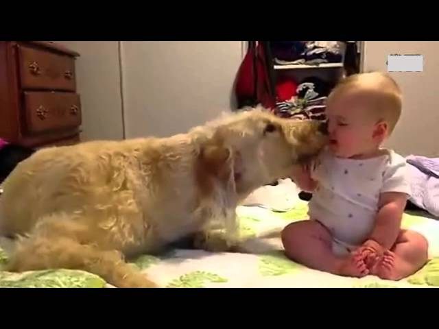Adorable Baby & Cute Dog.Funniest Dog is giving baby  sweet kisses