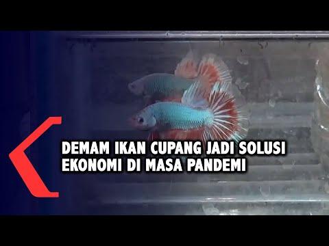 WOW TELAT BAYAR 118 HARI DI RUPIAH CEPAT, HADEHHH.. from YouTube · Duration:  11 minutes 52 seconds
