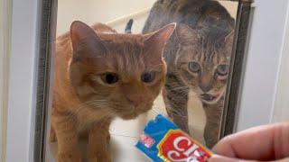 おバカ猫もちゅーるで釣れば透明な扉も通れるはず!!