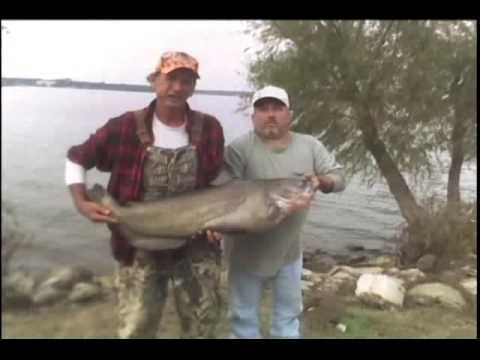 Danny King Punch Catfish Bait