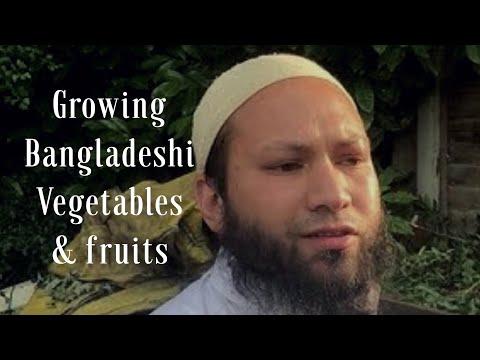 GARDENING WITH MOTHIN ALI( CHARTERED ACCOUNTANT & ALIM ) GROWING  BANGLADESHI VEGETABLES  JUNE 2017