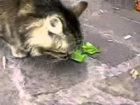 cat Betka eating salat