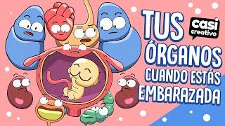 Tus órganos cuando estás embarazada | Casi Creativo