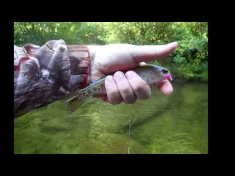 Fly Fishing Lost Creek Cove, NC August 27, 2016