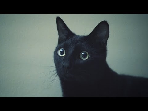 N2 the Talking Cat S4 Ep19 - Guard Cats