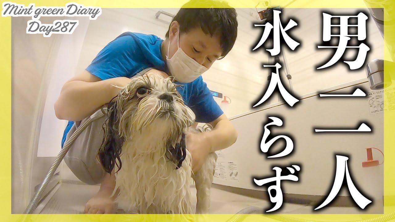 【シーズーとおじさん】アラサー男による犬のシャンプー!男二人の濃密な時間♡【287日目】