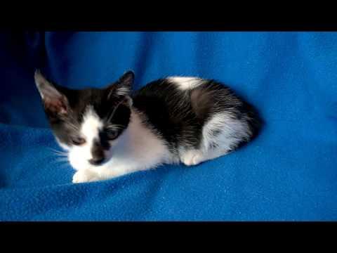 Filbert - for adoption Sheets Pet Clinic Cat Adoptions
