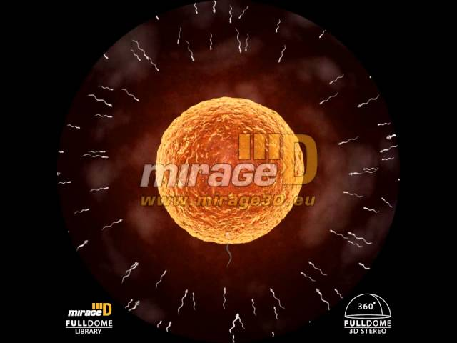 Egg Cell Travel Video