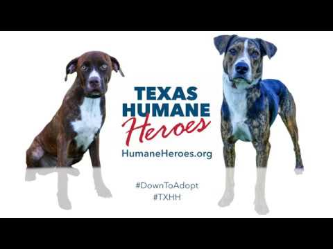I Need A Hero - Texas Humane Heroes