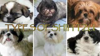 Know more about Shih Tzu