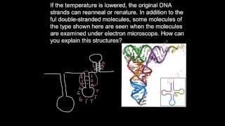 Single stranded DNA