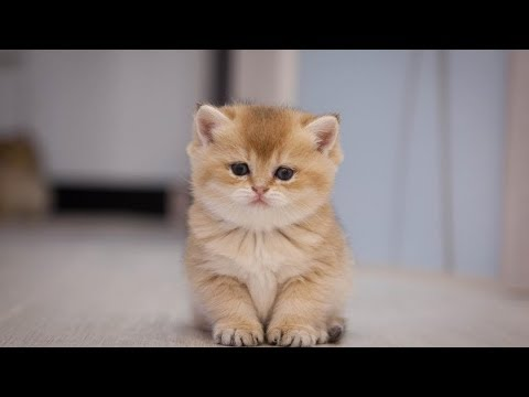 Kitten 🔴 Funny and Cute Baby Cat s Compilation 2019 1  Adorable Cats