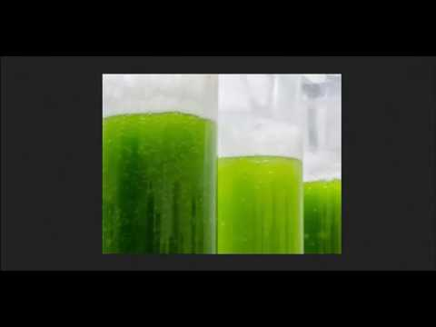 10X Better Algae Farming For Biofuel