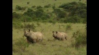 Los animales de África