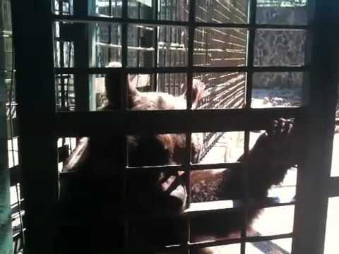 La prigione dell'orso