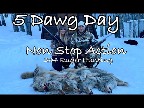 5 Dawg Day Non Stop Coyote Hunting Action