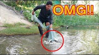 #แทบช็อค!! เมื่อเจอปลาฝูงใหญ่ หว่านทีเดียวติดมาขนาดนี้ Cast Net Fishing