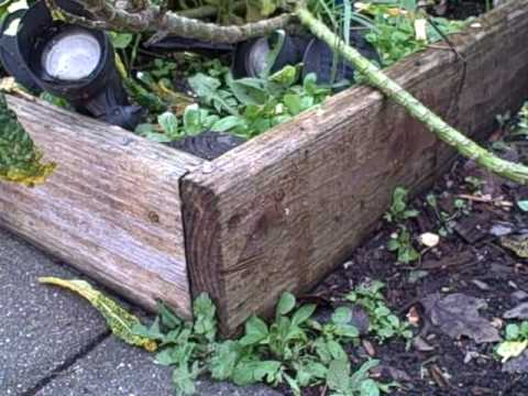 redwood or cedar for raised beds 3
