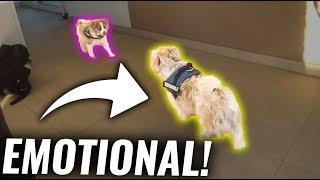 Hund FLASH trifft seinen BRUDER das erste mal!