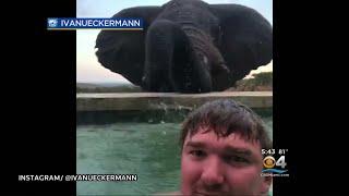 Video Trending: Man Captures Video With Elephant download MP3, 3GP, MP4, WEBM, AVI, FLV November 2018