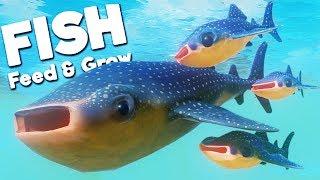 RAISING MY ADORABLE WHALE SHARK BABIES! | Feed and Grow Fish
