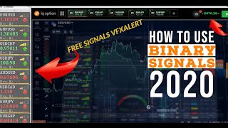 Best binary options signals 2021 honda dog racing betting rules