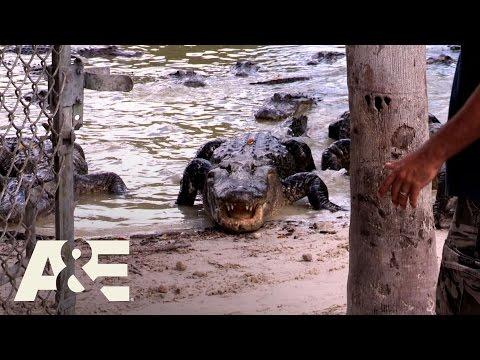 storage-wars:-miami:-kevin's-alligator-head-(season-1,-episode-4)-|-a&e
