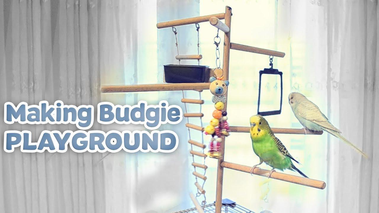 Making Budgie Playground