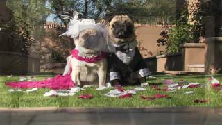 Pug Wedding Trailer - Whitney Sings Last Love