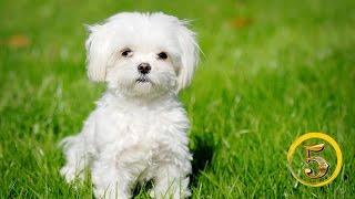 Złota Piątka: Najpiękniejsze rasy psów!