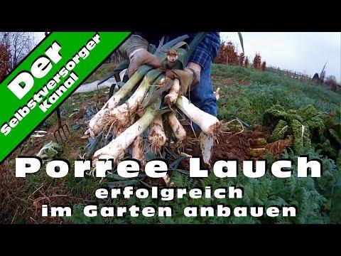Porree Lauch erfolgreich im Garten anbauen