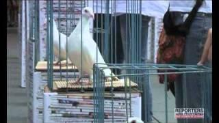 2010 - Les colombes de la paix pour Liu Xiaobo