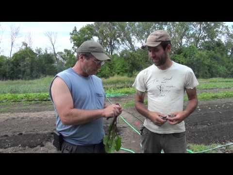 Blue Island Going Green: Organic Farm