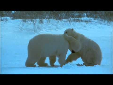 Fantasy Style World Music    -   Nanuq (Polar Bear)