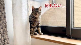 引っ越しで家の中の物が全部無くなったときの猫の反応がこちらですw