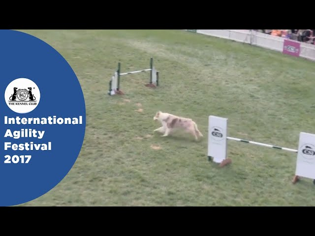 Nations Cup Final Large - Part 2 | International Agility Festival 2017