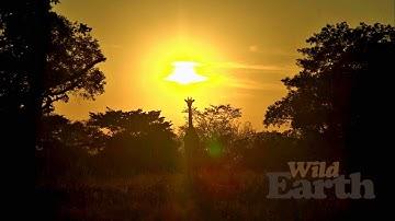 WildEarth - Sunrise Safari - 2 May 2020