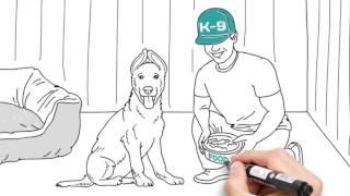 Дрессировка собак в Алматы. Школа дрессировки К-9