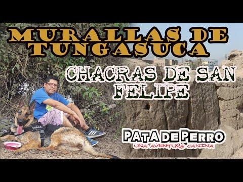 MURALLAS DE TUNGASUCA Y CHACRAS DE SAN FELIPE -PATA DE PERRO una aventura canina