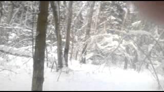 ШирокоФФ Бой  Прямошерстный ретривер Селятино по дороге на лыжню