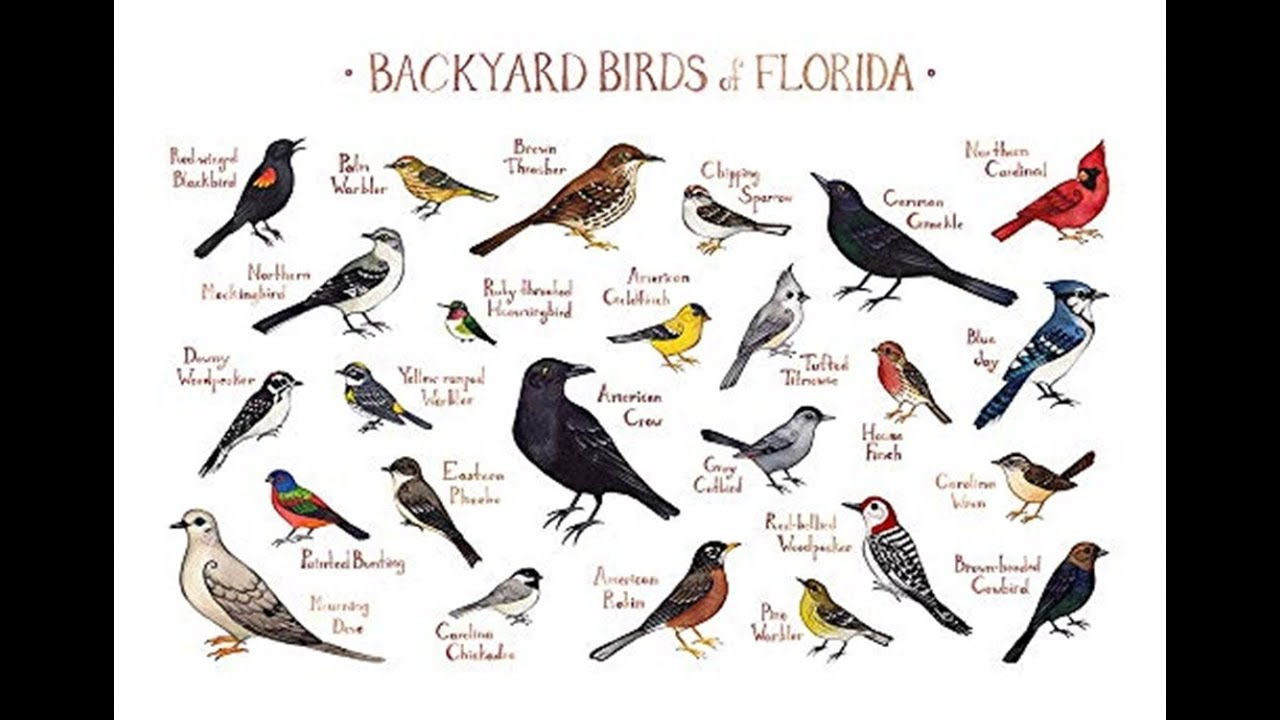 Great Backyard Bird count 2020 - YouTube