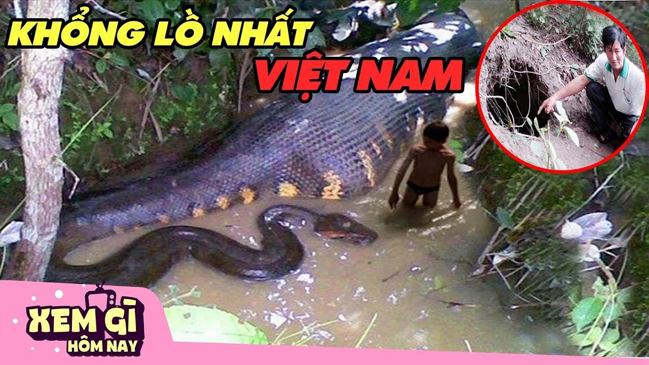 Những Loài Mãng Xà KHỔNG LỒ NHẤT Được Tìm Thấy Ở Việt Nam | XEM GÌ HÔM NAY