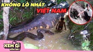 Những Loài Mãng Xà KHỔNG LỒ NHẤT Được Tìm Thấy Ở Việt Nam   XEM GÌ HÔM NAY