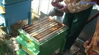 Гледане или отглеждане на пчели