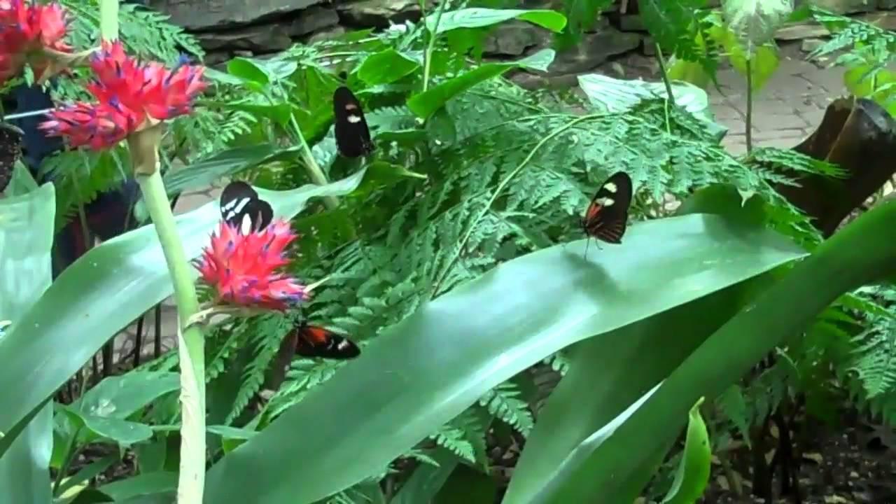Superior Butterflies At Frederic Meijer Garden In Grand Rapids Michigan