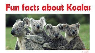 Fun facts about koalas for kids - learn about cute koalas - koala information - Simply E-learn Kids