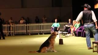 Dima Yeremenko Superdogs Live Nec 2014 Doggie Dancing