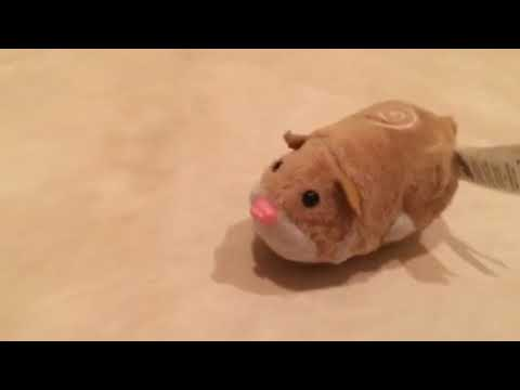 Zhu Zhu Pets - (POSSIBLE PROTOTYPE) Mr. Squiggles Review (Before Speaker Repairs)