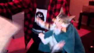 Cat Loves Chicken