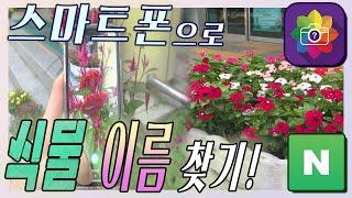 스마트폰으로 식물 이름 찾기! (2가지 앱) #네이버 …